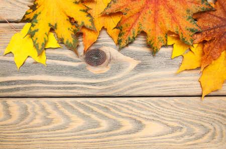 hojas antiguas: fondo de madera de oto�o con hojas de arce coloridas