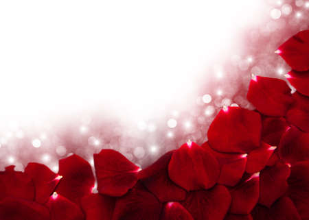 red rose bokeh: Red roses petals  on a bokeh background