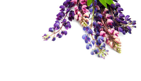 Lupine flowers isolated on a white background Stock Photo