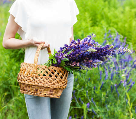 arm bouquet: girl holding a basket with  bouquet of lupine