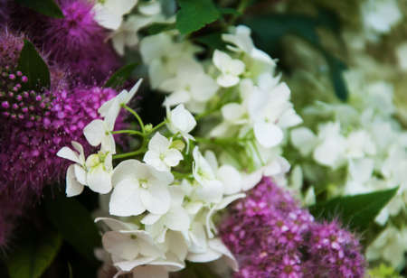 Bouquet of white hydrangea and purple flowers stock photo picture bouquet of white hydrangea and purple flowers stock photo 62787998 mightylinksfo
