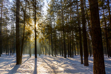 Frosty winter landscape in snowy forest. Sun rays thru forest Stock Photo