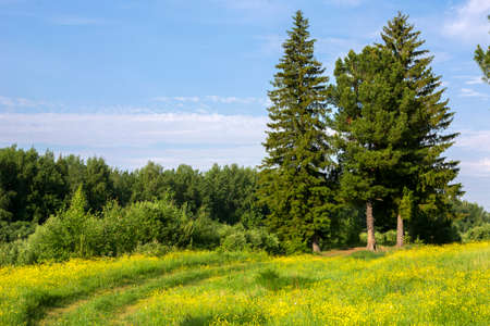 landscape with a green tunnel of trees on a path Stock Photo
