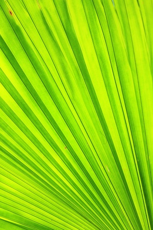 Leaves palm background