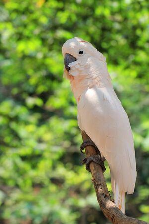 Белый ара Фото со стока