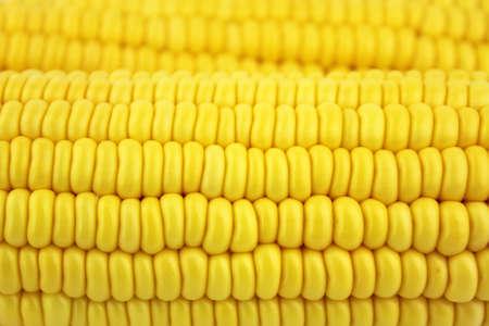 Fresh corn cobs Stock Photo