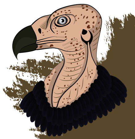 scavenging: Vulture head colored