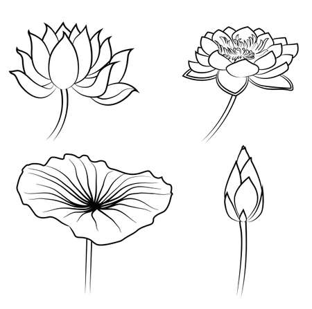Floral Water Lily Elements for design Vector