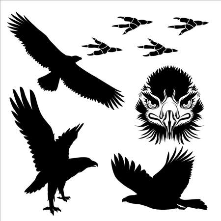 fly: Poses of eagle and closed up drawing face silhouette vector