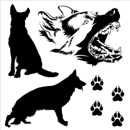 perro policia: Poses de perro de pastor alemán fector silueteado en eps10