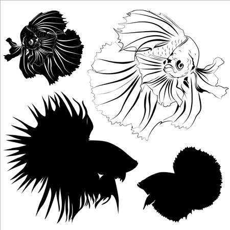 siamese: Silhouette, carving, and drawing of Siamese fighting fish vector in eps10