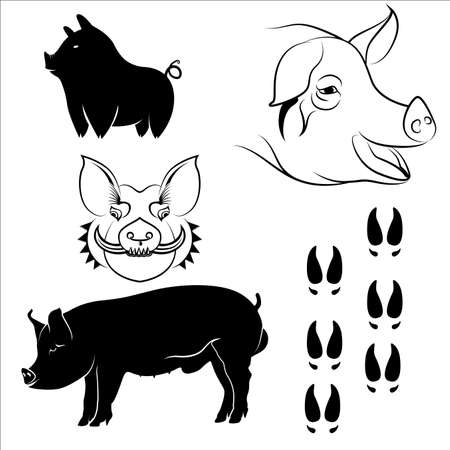 Poses of large white Pigs silhouetted fector in eps10 Illustration