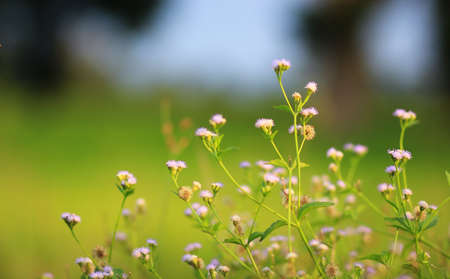 breezy: flower