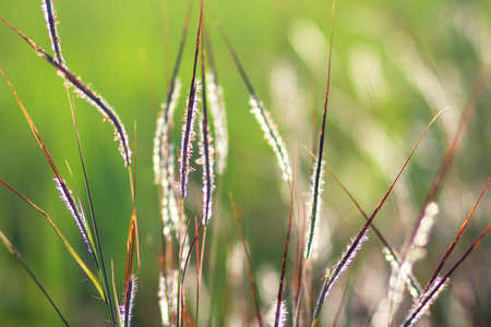 breezy: nature Stock Photo