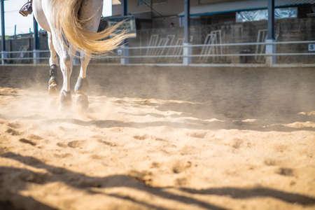 dusty: horses running through a dusty field Stock Photo