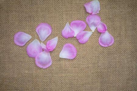 sackcloth: rose petal on sackcloth