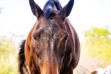 gait: portrait horse look at camera Stock Photo