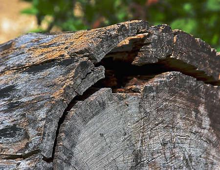 sunny day, the texture of a log has interested