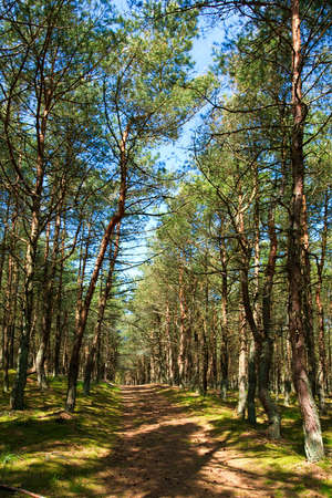 The Glade in National park Curonian Spit Stock Photo