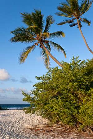 Coast of Indian ocean. Palma on coast