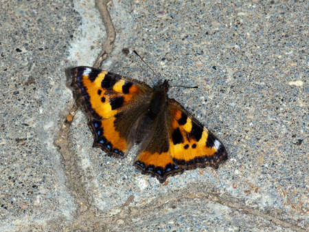 The butterfly sitting on road concrete at a sunlight Stock Photo