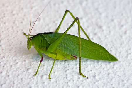 The grasshopper sat on a wall