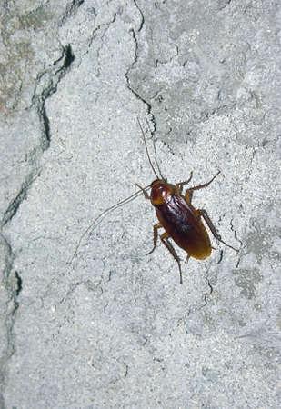 cockroach �� concrete wall  Stock Photo