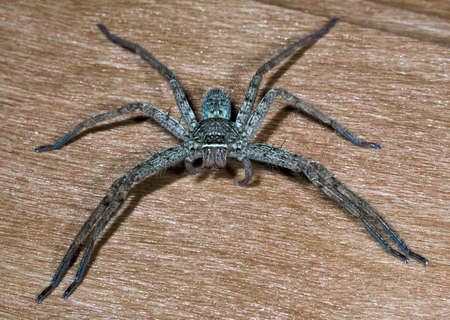 The big spider on a board Stock Photo