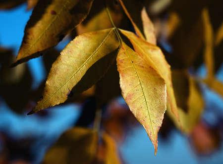 Yellow leaves. Autumn