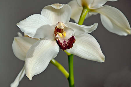 White orchid on a talble. Flower to holiday