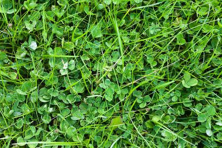 Grass after rain in summer at a garden Stock Photo