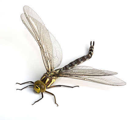 Dragonfly creeps on a white background photo