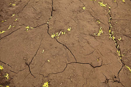 The texture of the dried land, brown clay Stock Photo - 17162402