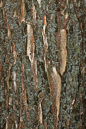 The texture of the bark of a tree