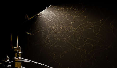 floodlit: Insects flying in the night next to the street lamp
