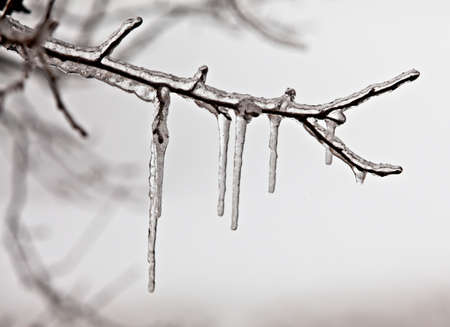 Ice and snow on on a branch after a sleet in Moscow suburbs photo