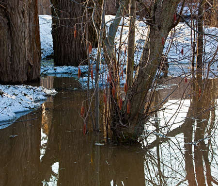 The flooding. Trees in melt water. A natural disaster.