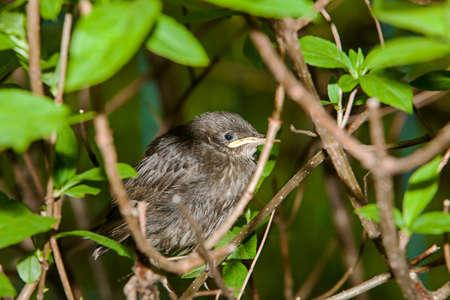 Nestling birds in the bush
