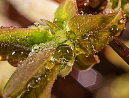 Water drops on leaves after a rain Stock Photo