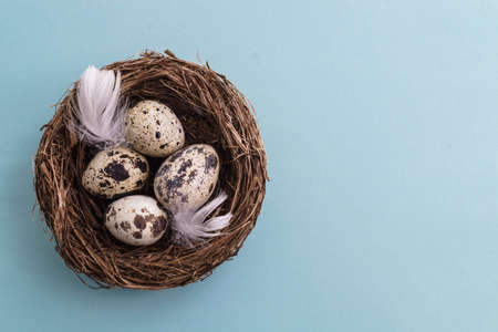 Quail egg in nest, spring and easter with white feathers photo
