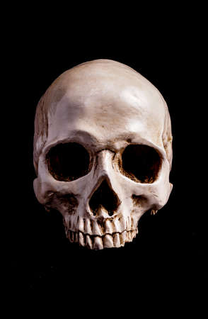 Human Skull Isolated on black, with copy space