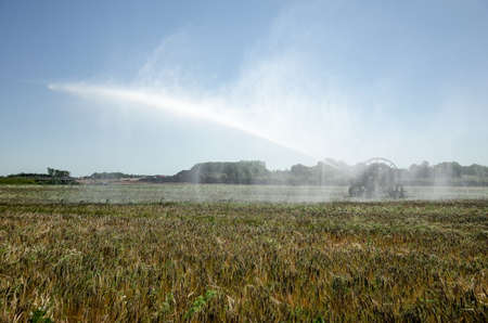 pivot: Danish summer when the crops in the field requires water of an agricultural irrigation system to give the best yield. Irrigation Pivot Stock Photo