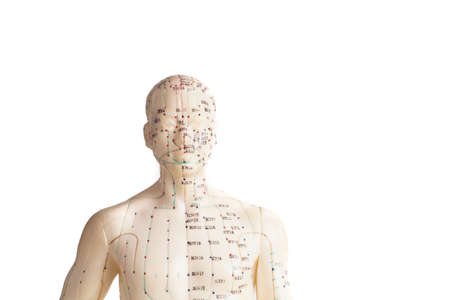 dolor en el pecho: modelo de la acupuntura del humano, aislado en blanco Foto de archivo