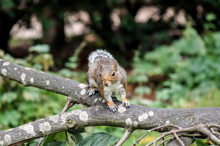 likable: The squirrel sitting on a branch in the park and is wary of dangers