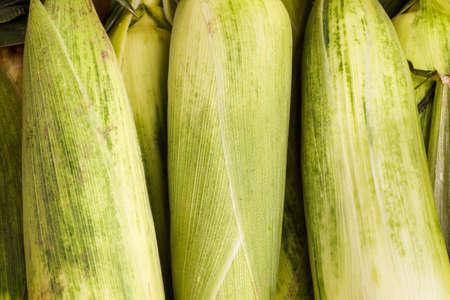 corncob: Healthy organic fresh Corncob, ready for the farmers marked