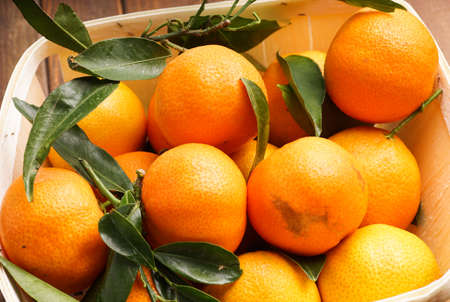 clementines: fresh organic clementines picked with green leaves Stock Photo