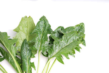 fryed: edible dandelion leaves , lettuce can be eaten both raw in salads and fryed as cabbage Stock Photo