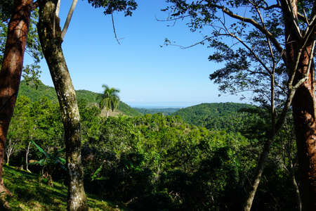 forrest: beautiful green wild Tropical Forrest with palms