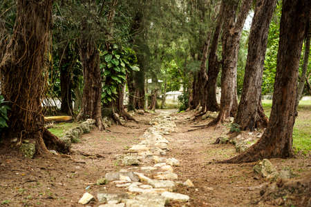 both sides: stone-paved path with large old trees on both sides Stock Photo