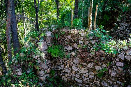 esclavo: muro de piedra cubierto con plantas en una selva tropical. Ruinas de las casas de esclavos en Cuba